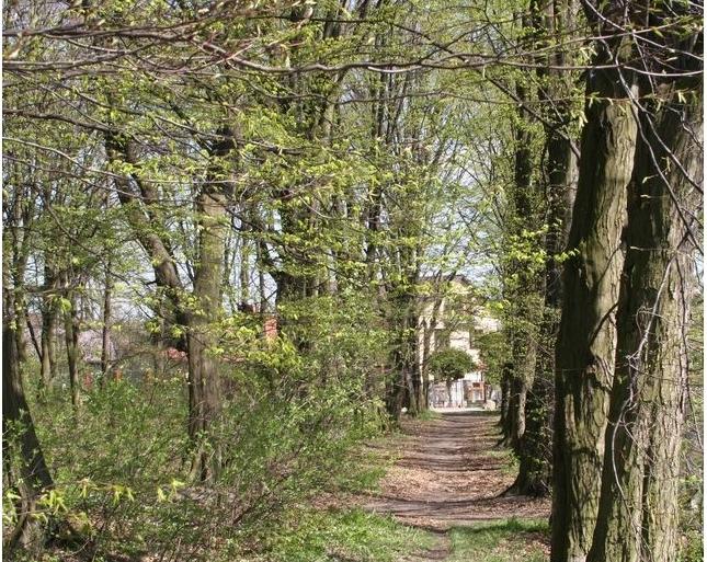 Park_krajobrazowy_Wola_Pniewska.jpg