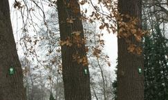 Park przyklasztorny i leśny w Derdach