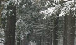 Kompleks leśny w Magdalence