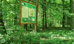 """Rezerwat przyrody """"Grądy Osuchowskie"""""""